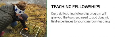 Teaching Fellowships
